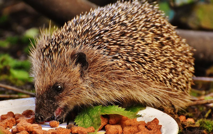 How To Attract More Wildlife To Your Garden